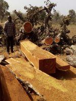 Kosso Wood, Pterocarpus Erinaceus
