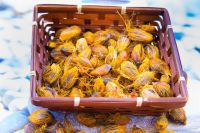 Palm Kernel Nut and Oil