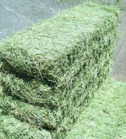 Alfalfa Hay Bales Purity 99.9%