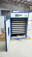 electric commercial factory chicken poultry reptile breeding