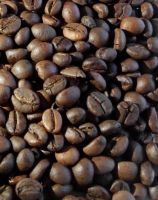 Best Sumatra Coffee Beans