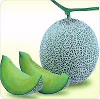 QXM late maturity green skin green flesh f1 hybrid hami musk melon seeds