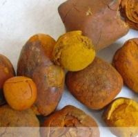 best quality cow and ox gallstones for sale at good price
