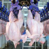 Fresh  Frozen  Halal Chicken