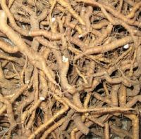 Dried Ipecac Roots