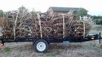 Buy Red Deer Antlers   Fallow deer Antlers   Roe deer antlers