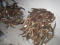 Buy Red Deer Antlers | Fallow deer Antlers | Roe deer antlers