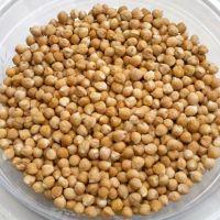 Chickpeas Seeds