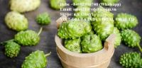 BEST PRICE AND QUALITY VIETNAM DRIED NONI FRUIT - FRESH NONI FRUIT // MS. HEBE +84 902 800 740