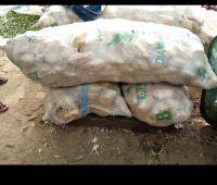 beans, gorontula, maize, dried fish, palm kernel,