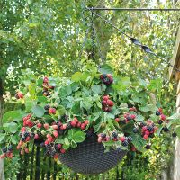 Fruit and Berry Seeds Available