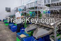 Cashew nut LP Vietnam cheap price