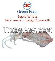 Squid Loligo