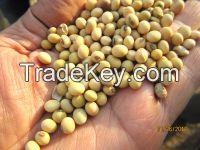 Grade A quality Non-GMO Soybean Seeds for Sale