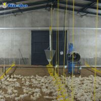 Auto Poultry Feeding Equipment System for Broiler Farm