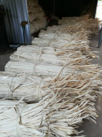 Hot Sale Dried Palm Leaves