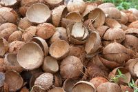 RAW COCONUT SHELLS CHEAP PRICE  FOR MAKING CHARCOAL