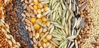 Nuts Seeds And Grains