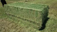 High Quality Animal Feed Alfalfa Hay From Russia Federation