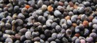 Blue Poppy Seeds (Best Quality), wheat poppy seeds, Sesame seeds