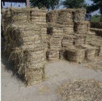 Rice Straw (High grade from Pakistan)