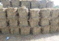 Rice Straw (High grade from Pakistan)