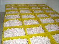Premium Quality Processed Frozen Chicken Feet & Paws Suppliers