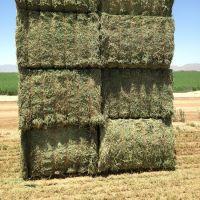Bales Packaging and Alfalfa Hay Variety high quality alfalfa hay