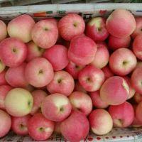Fresh Royal Gala Apple, Fuji Apple, Red Delicious Apples