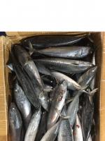 Whole Round Tuna Fish