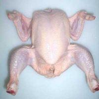 halal fresh frozen bone in whole chicken
