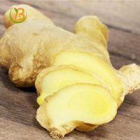 Premium Grade Air Dry Fresh Ginger from Thailand
