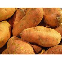EXPORT/SELL/SALE FRESH SWEET POTATOES