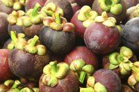 Premium Sweet Fresh Mangosteen Fruit In Thailand