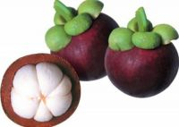 High Quality Thai Fresh Fruit Mangosteen
