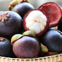 Fresh MANGOSTEEN New Crop 2019 for Thailand Wholesale Price!