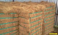 COCONUT FIBER WITH HIGH QUALITY AND LARGE QUANTITY FOR SALES