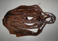 Best quality dried octopus, dried squid from Thailand