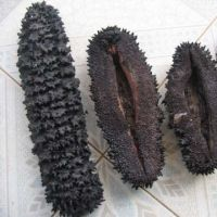 Natural Dried Prickly Sea Cucumber in Different Sizes From Thailand