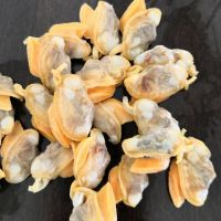 IQF frozen shellfish clam without shell from Chinese seafood supplier