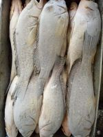 Frozen Grouper Fish Whole Round