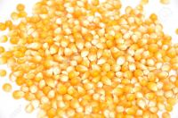 Yello Corn