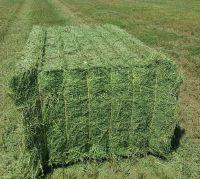 High Quality Animal Feed Alfalfa Hay From Russia Federation