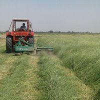 Quality Alfalfa Hay Bales