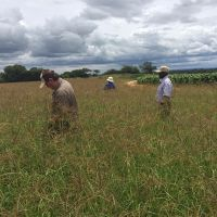 Cheap Alfafa Hay for Animal Feeding Stuff Alfalfa, hay/alfalfa hay pellets