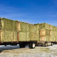 Quality Alfafa Hay for Animal Feeding Stuff Alfalfa / Alfalfa Hay Hot Sales