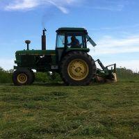 Premium Grade A Alfalfa Hay, Timothy Hay, Animal Feed for sale