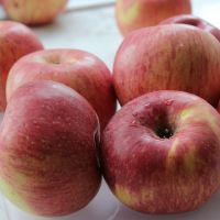 apple fresh red fuji