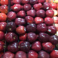 Fresh Apples Red Chief Red Delicious Polish origin