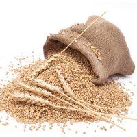 Ukrainian High Quality Selected Wheat